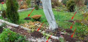Kuinka päästä eroon myyristä puutarhassa: tehokkaita työkaluja ja niiden käytön vivahteita