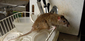 Hatékony elektronikus patkány- és egérriasztó kiválasztása