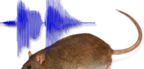Milyen hanggal lehet a patkányokat félni otthonról?