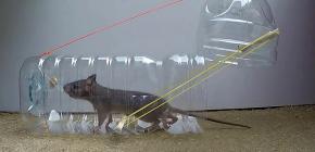 8 účinných pascí na potkany