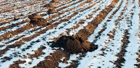 Hur vintern är mullvad och vilar den under den kalla säsongen?