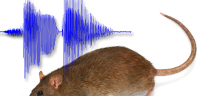Hangi sesler evden uzakta korkabilir?