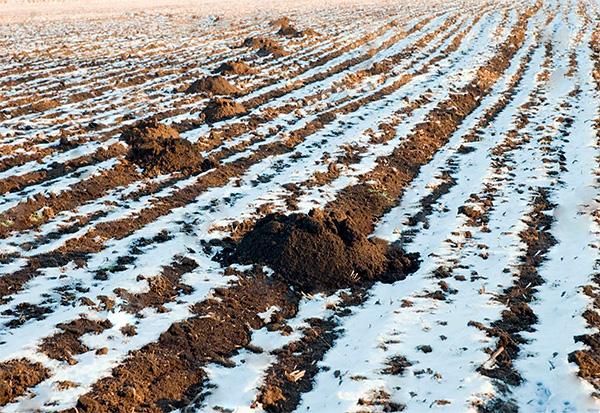 Les taupes hibernent-elles en hiver et comment passent-elles l'hiver?