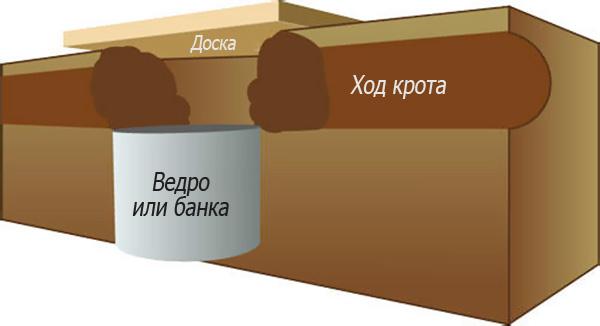 A vakond fej vázlata egy kannából (vagy vödörből).