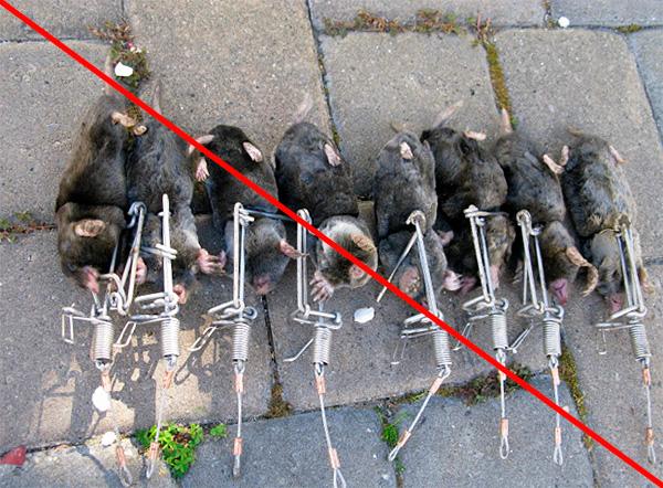 A vakondok elpusztítása egyáltalán nem szükséges, mivel életben tarthatók és a kertben szállíthatók.