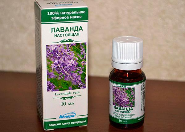 Det noteras att mullvader är rädda (undviker) lukten av lavendel eterisk olja.