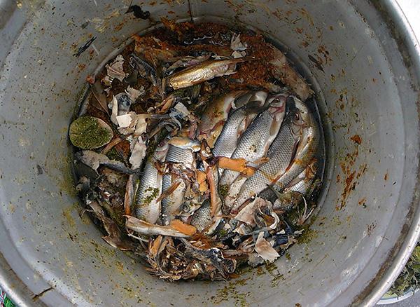 Az anyajegyek elriasztásának egyszerű és népszerű módja a rothadt halak használata.