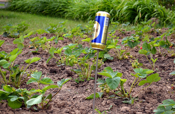 Időnként megszabadulhat a vakondoktól a nyaralóban az ilyen egyszerű, alumínium söröskannákból készült zajok segítségével.