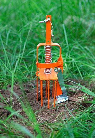 En sådan fälla installeras direkt vid mullvadens ingång till jordens yta.