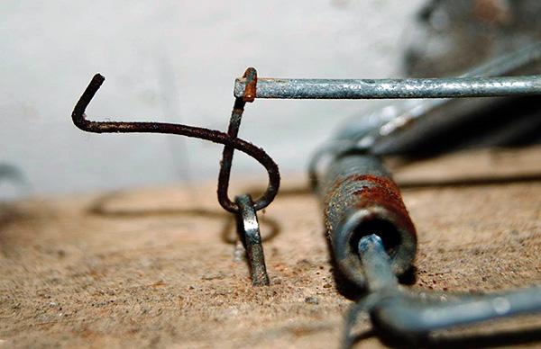 Mullfångar fångas ofta med hjälp av konventionella musfällor.