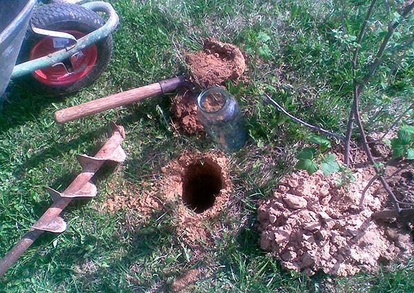 En mullvad kan fångas i en enkel fälla i form av ett hål ...