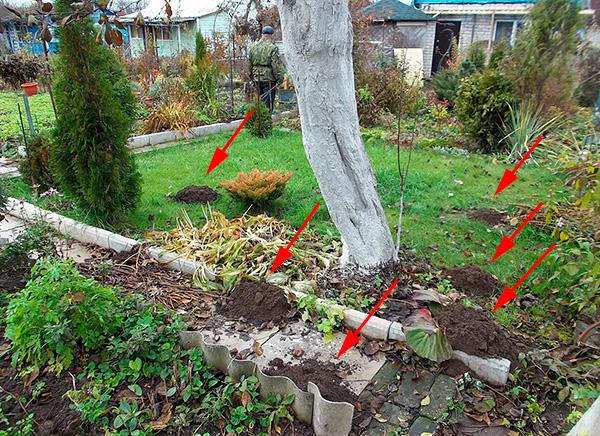 Många trädgårdsmästare måste hantera mullvadar redan efter att byggandet och planteringsarbetet har utförts på platsen, och naturligtvis komplicerar detta kontrollen av skadedjur betydligt.