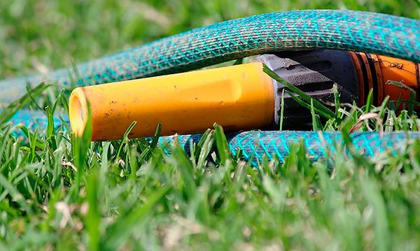 Som regel gör riklig fyllning av mullvasspassager med vatten trädgården mer skada än nytta.