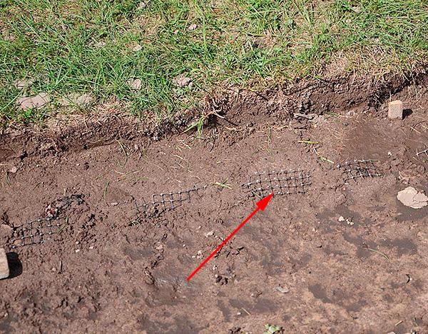 Ett exempel på att skydda en plats från mullvad med en speciell gräsmatta.