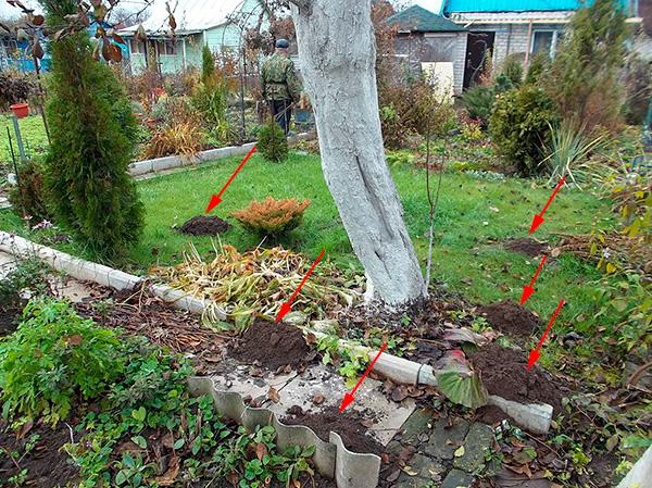 Låt oss försöka ta reda på vilka metoder och medel som pålitligt kan bli av med mol i trädgården ...