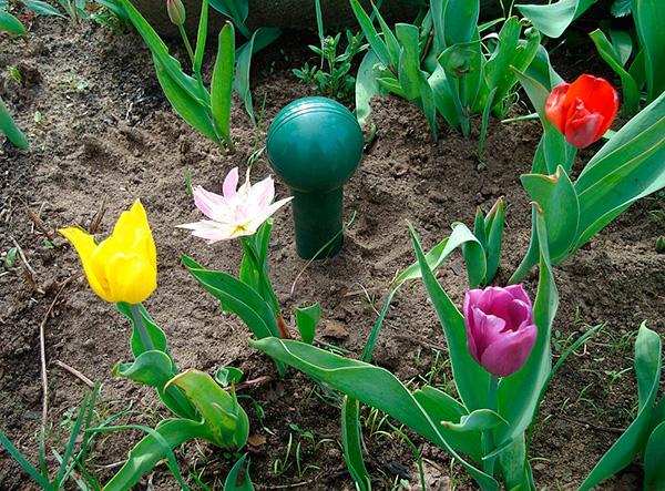 Fotot visar ett exempel på en ljudmullarrepeller installerad i en blommaträdgård.