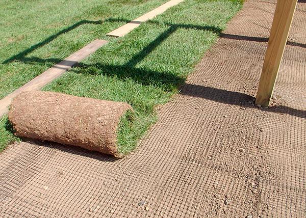 Ett exempel på att lägga ett speciellt nät från mol på en gräsmatta.