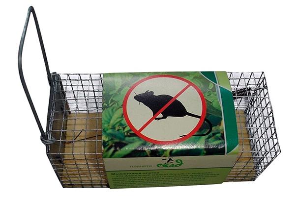 Zhivolovka est une option sûre pour attraper des rats sur des poulets. Cependant, lors de son utilisation, vous devez toujours vous demander quoi faire avec les rongeurs capturés.