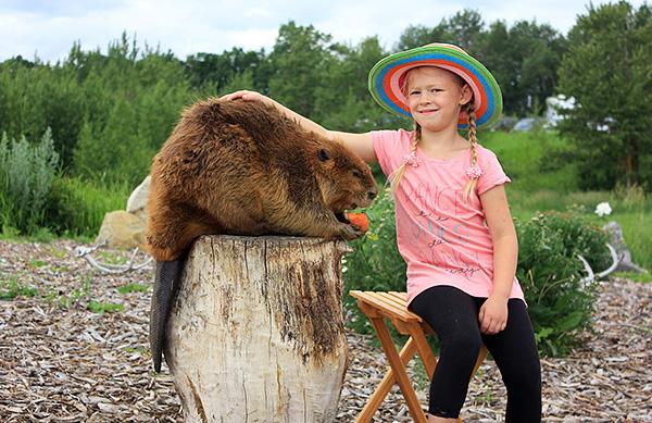 Le castor est également un gros rongeur dont la masse peut atteindre plus de 30 kilogrammes.