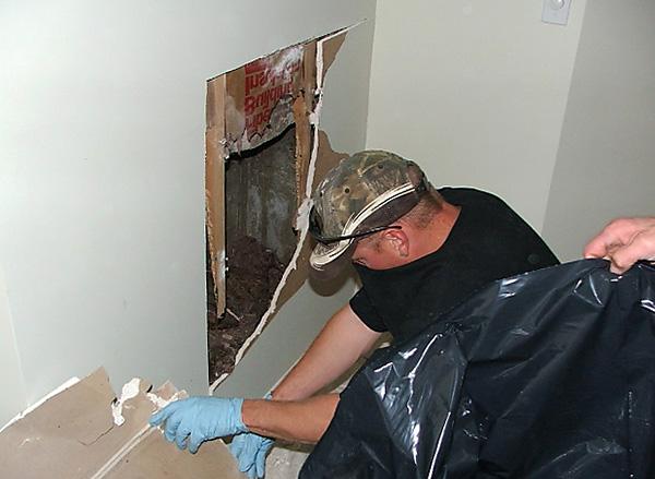 A patkányok elpusztíthatják a méreg hatásait nehezen megközelíthető helyeken, például a falak mögött és a padló alatt, és bomlásukkor erõs barlangös szagokat okozhatnak.
