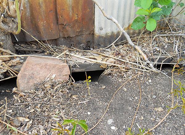 A terméket a patkány-ürülék megjelenésének helyein, valamint a lyukak és rések közelében kell elhelyezni, amelyeken a patkányok és egerek beléphetnek a helyiségbe.