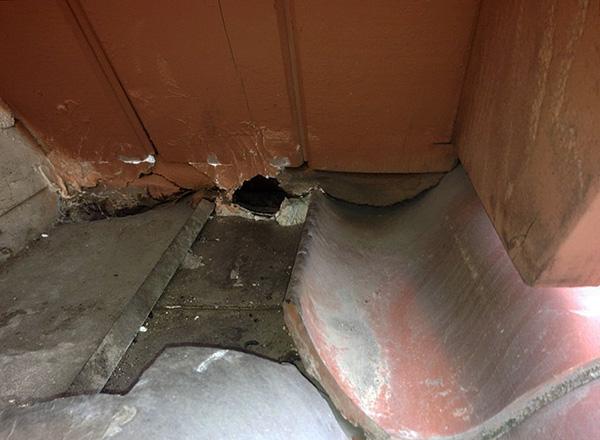 Dans la plupart des cas, les rats empoisonnés meurent à l'extérieur et non derrière les murs ou sous le sol.