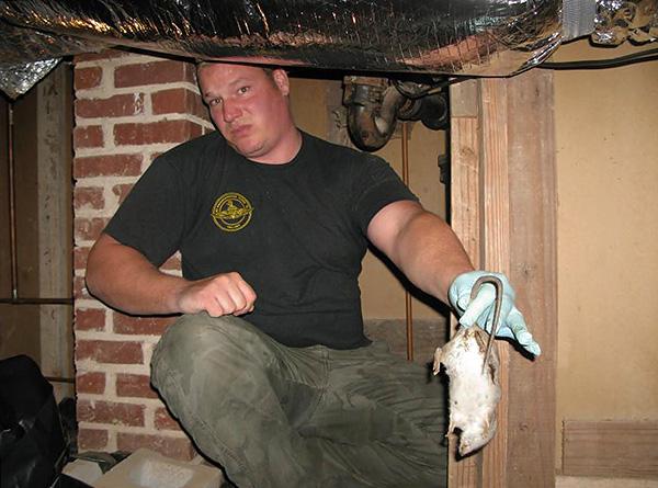 Si le rat empoisonné meurt néanmoins derrière le mur ou sous le plancher du salon, il commence alors à se décomposer et à émettre une terrible odeur de cadavre.