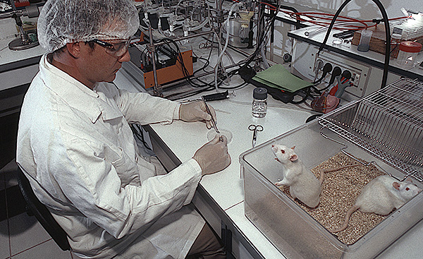 A laboratóriumi patkányok a tudomány és az orvostudomány különféle területein végzett kísérletek egyik fő célja.