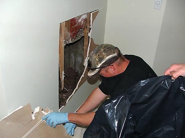 Les rats et les souris peuvent mourir de l'action du poison dans des endroits difficiles à atteindre (par exemple, sous le sol et derrière les murs) et provoquer l'apparition d'une odeur de cadavre dans la pièce.