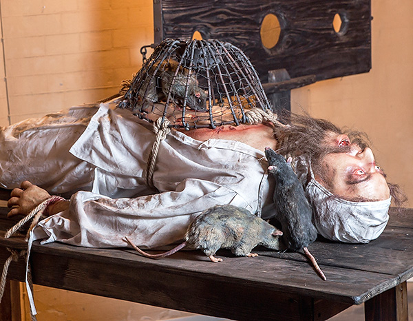 Au Moyen Âge, la torture à l'aide de rats était assez courante ...