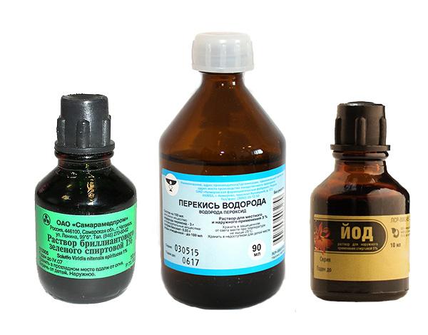Ha rágcsálót megharap, azonnal ki kell öblíteni a sebet vízzel és antiszeptikummal (jód, hidrogén-peroxid vagy például briliánszöld).