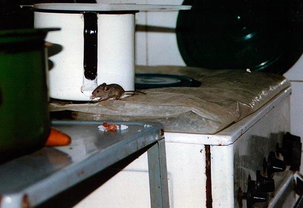 En règle générale, les appareils autres que les ultrasons ne causent pas d'inconfort suffisant aux souris et aux rats.