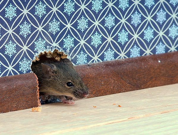 Avant d'acheter tel ou tel appareil, il est utile de lire des critiques à ce sujet - que cet appareil ait vraiment aidé au moins une personne à faire face aux souris ou aux rats de la maison ...