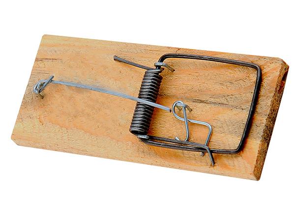 Les pièges à souris les plus courants conviennent également très bien à la capture de taupes.