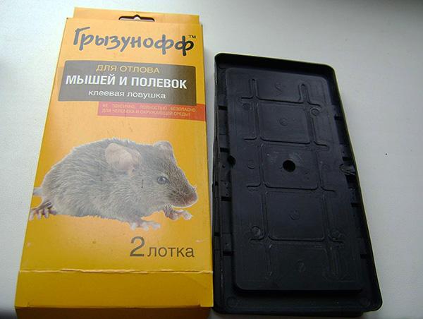 Piège à colle Gryzunoff pour attraper les souris et les campagnols.