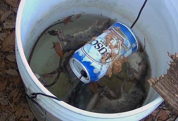 Patkánycsapda egy vödörből és egy forgó sörből ...