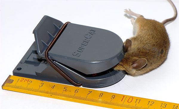 Ratcatcher SuperCat