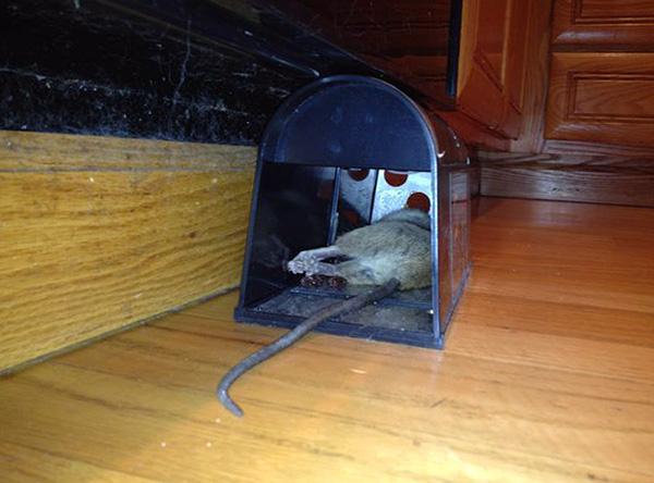 Ang resulta ng electric trap trap.