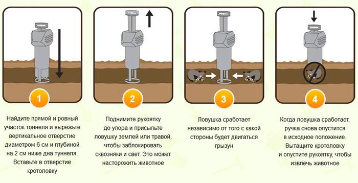 Kuvassa on myyräpään asennus maahan.